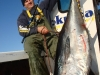 bluefin-on-spinning-tackle
